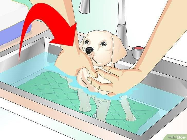 Можно ли купать собаку в жару и как часто – рекомендации