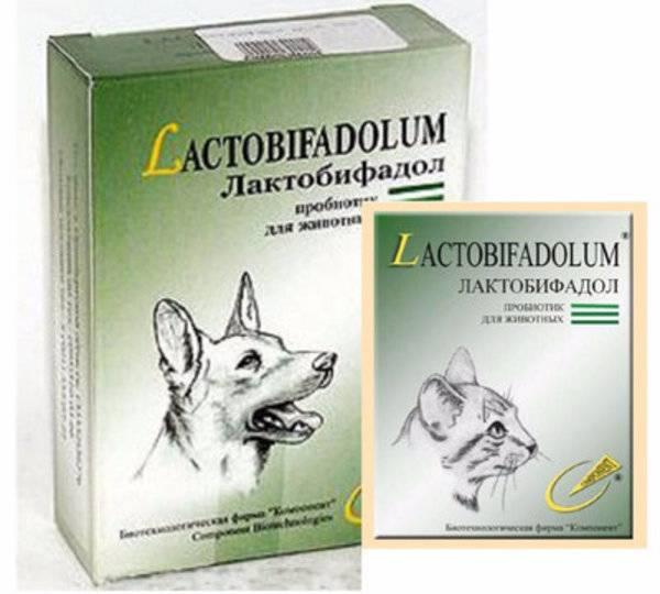 Микрофлора кишечника собак: физиологическое значение, возрастная динамика, дисбактериозы, коррекция — биотехнологическая фирма компонент