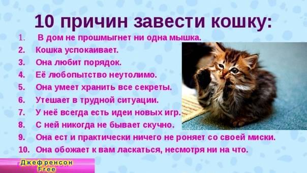Две кошки в доме, вторая кошка в доме, завести вторую кошку, фото, рекомендации по выбору