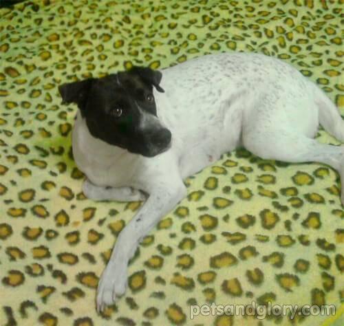 Бурлит в животе у собаки: причины, лечение, профилактика