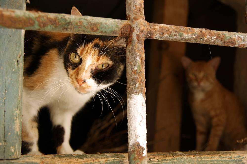 Лейкоз у кошек: [стоит ли бояться, как уберечь]