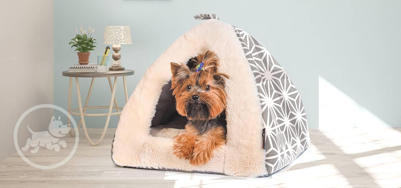 Место для собаки в квартире: как обустроить и приучить к нему питомца