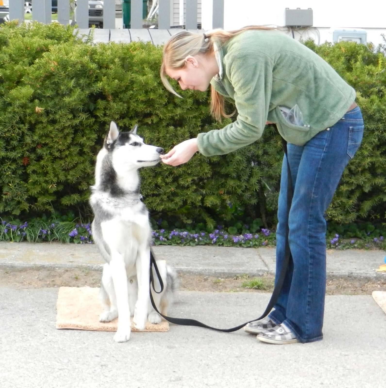 Дрессировка собак в домашних условиях: секреты успеха - kot-pes