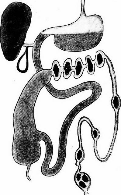 """Гингивит у кошек: причины, симптомы, диагностика, лечение, осложнения и профилактические меры   блог ветклиники """"беланта"""""""