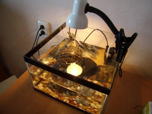 10 главных вопросов об уф лампах для рептилий (черепах)
