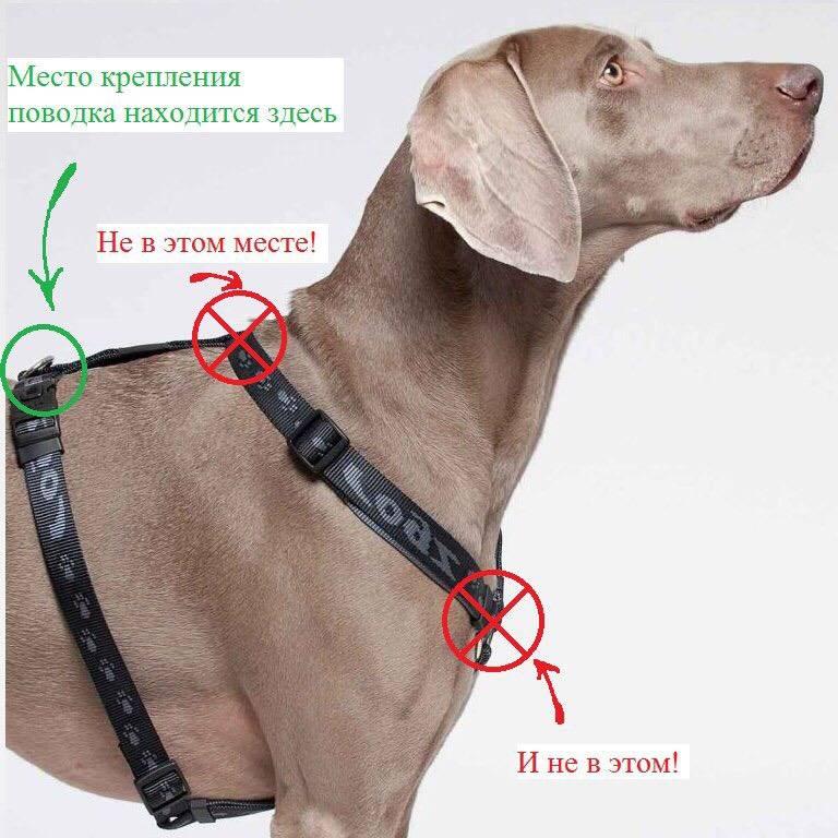 Шлейка для собак: что такое, как правильно выбрать и носить аксессуар