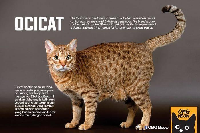 Породы кошек с фотографиями и названиями. каталог пород!
