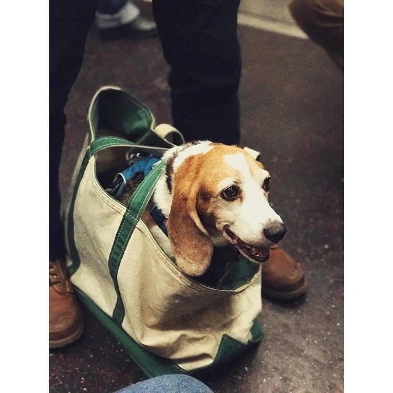 Важные нюансы, как перевезти собаку разным видом транспорта