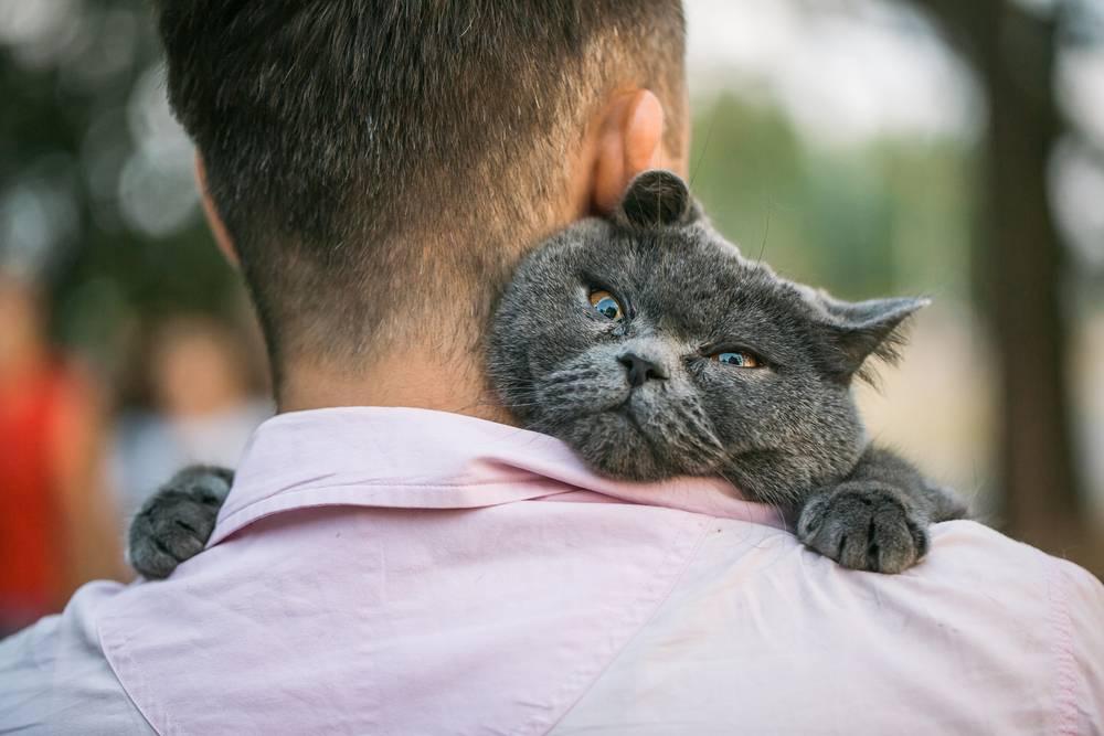 Как понять кошку? зоопсихолог о том, что на самом деле чувствуют наши домашние животные. новости - россия. metro
