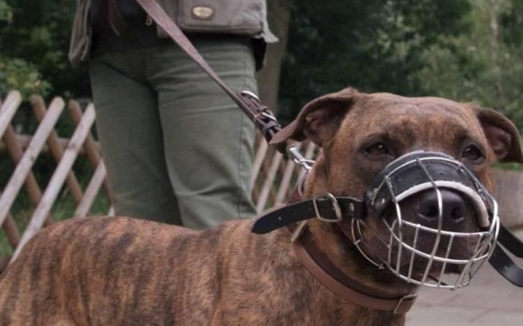 Собака кусает хозяина – что делать при агрессии к знакомым людям - про питомца