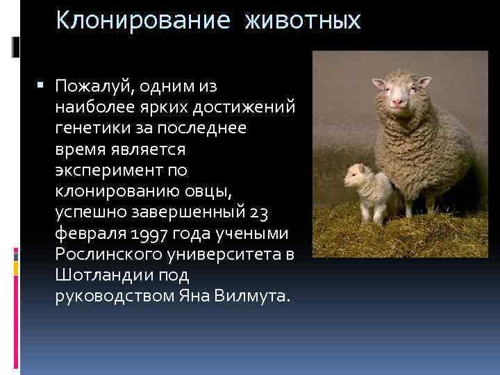 Клонирование домашних любимцев набирает обороты. когда клонируют человека? - hi-news.ru