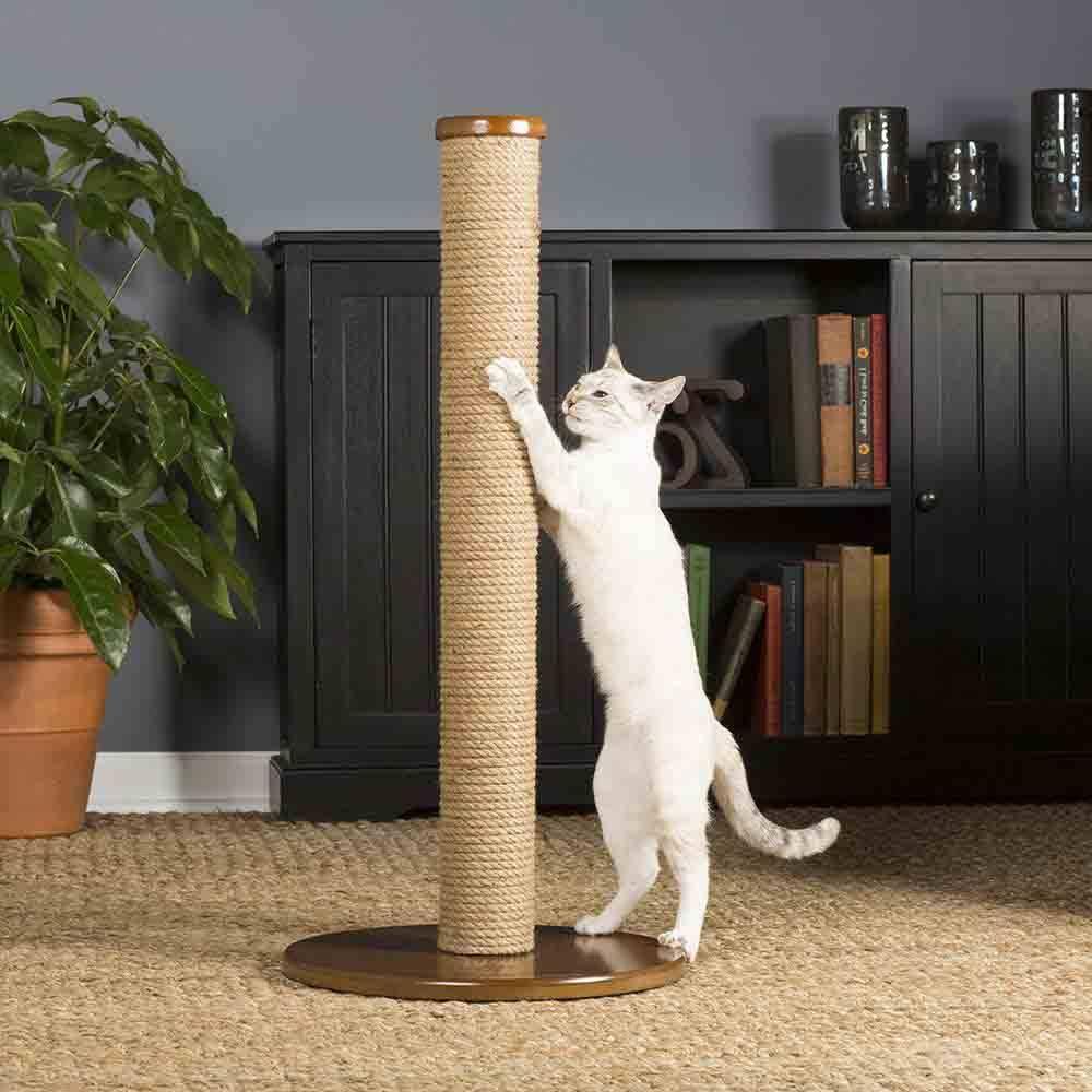 Как отучить кота драть мебель, диваны, обои, стены