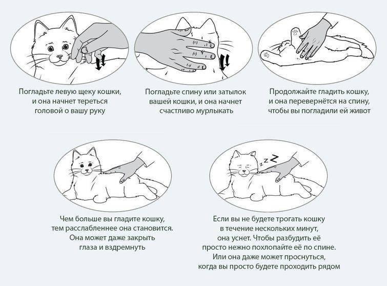 Почему икает собака: после еды, утром или перед сном, что делать владельцу