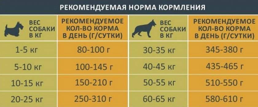 Какой корм лучше выбрать для щенков мелких, средних, а также крупных пород