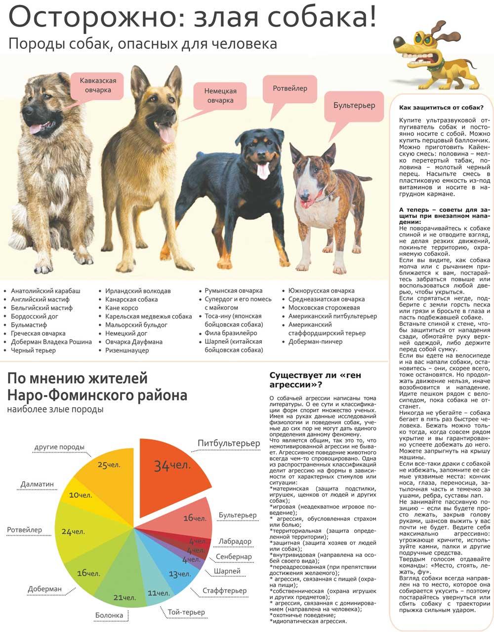 Топ-10 самых опасных пород собак в мире