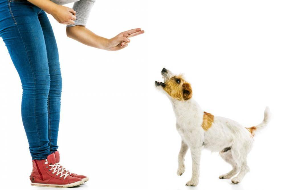 Как отучить собаку прыгать на людей от радости при встрече: проверенные методы