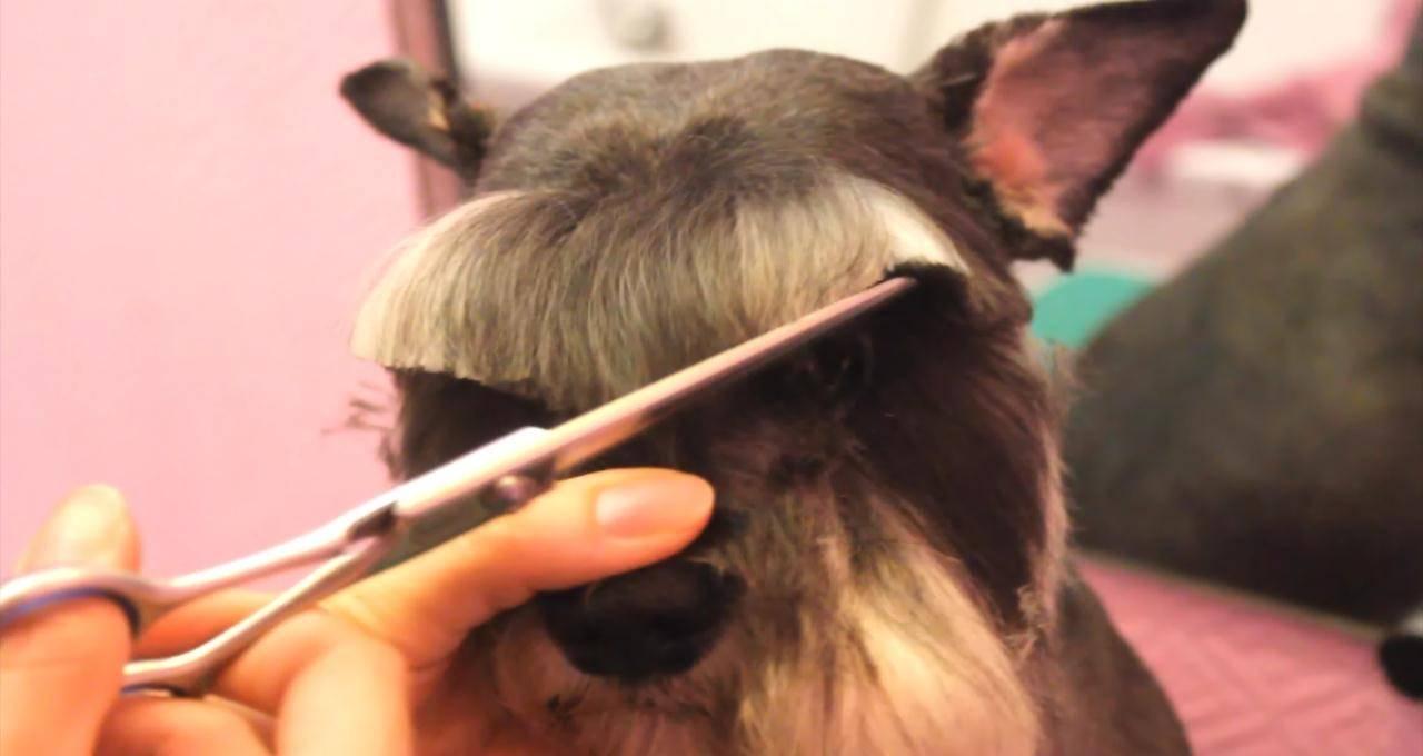 Как подстричь когти собаке: советы и эффективные методы
