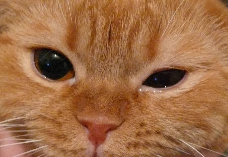Почему у кота слезятся глаза?