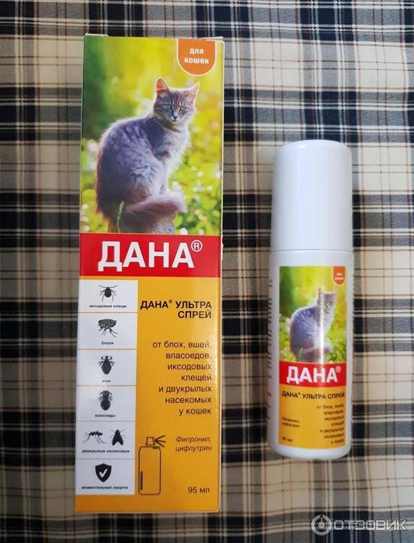 Лучшее средство от блох для кошек - препараты, ошейники, народные средства - kotiko.ru