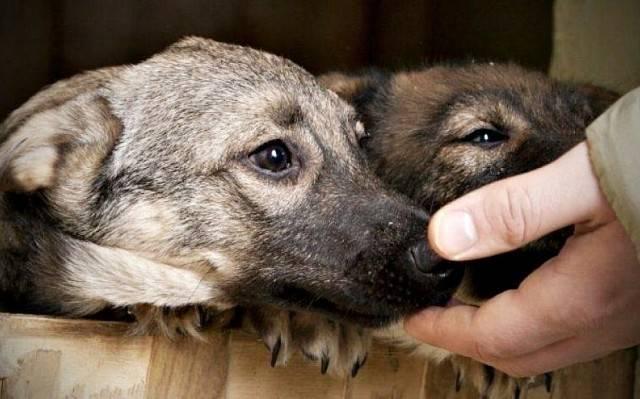 Приют для собак в москве и московской области. подарите жизнь другу - kot-pes