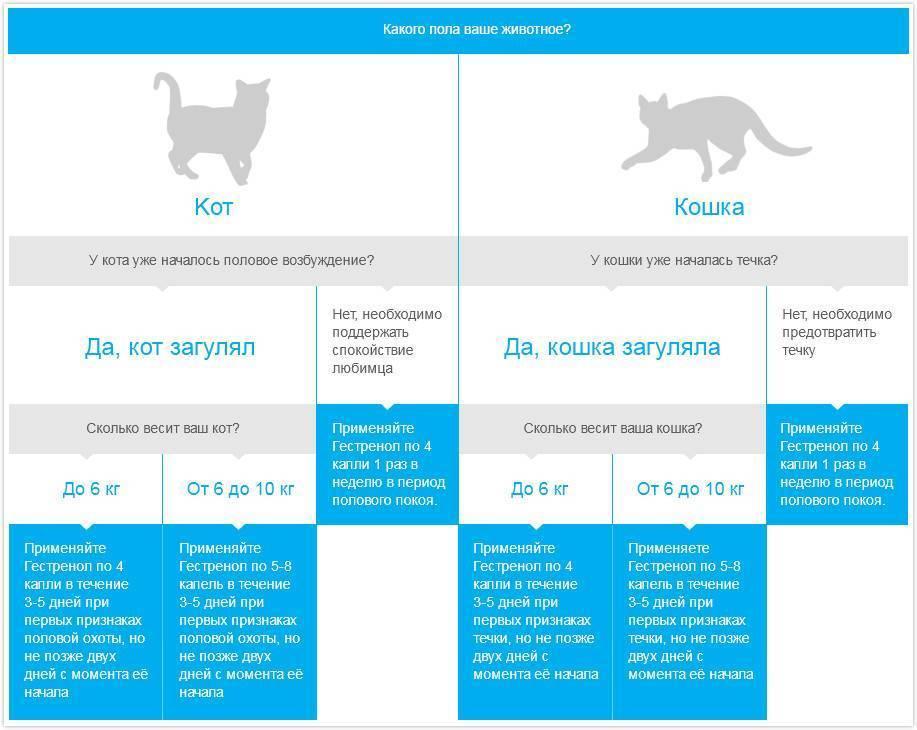 Как отучить кошку гадить в неположенном месте: полезные рекомендации