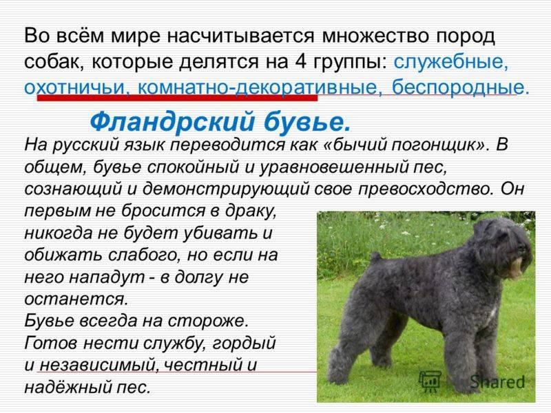 Самые древние породы собак в мире   интересный сайт