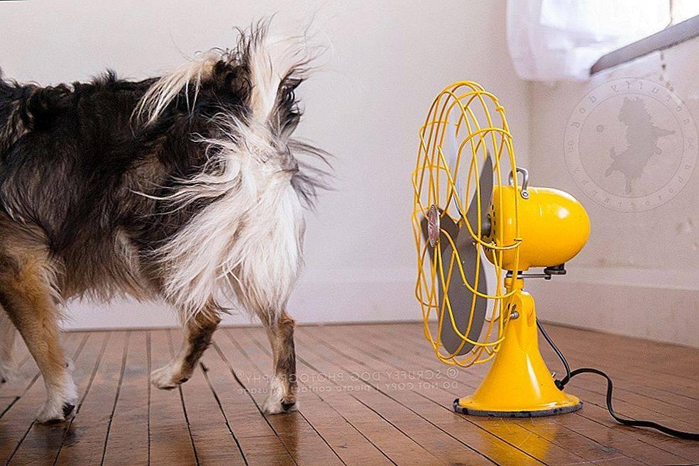 Можно ли купать собаку в жару и насколько часто
