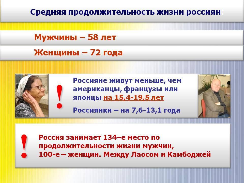 Русский спаниель: фото, купить, видео, цена, содержание дома