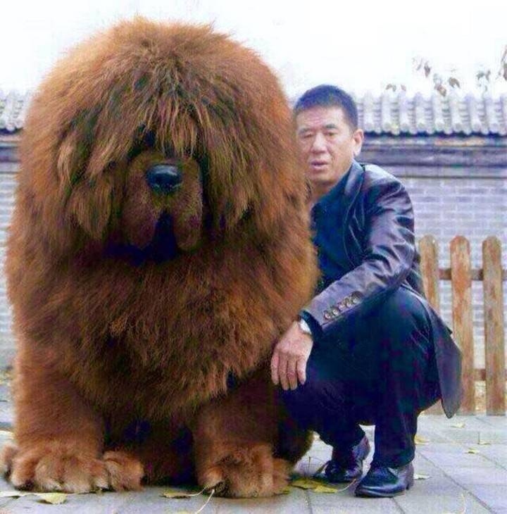 Самые сильные собаки в мире — топ 20 мощных пород