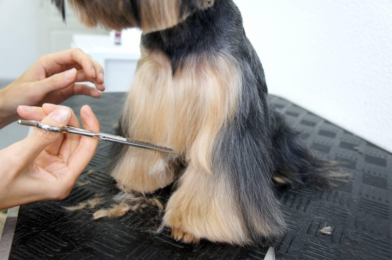 Как подстричь когти собаке: алгоритм действий, основные рекомендации для процедуры и приучения к ней, что делать при травмах