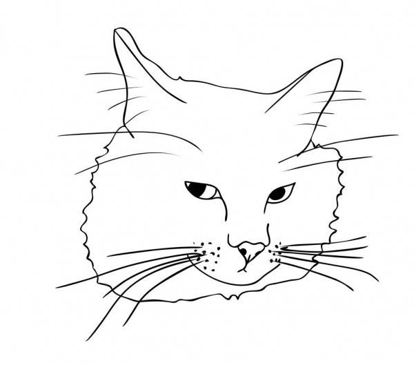 Как нарисовать кошку карандашом поэтапно