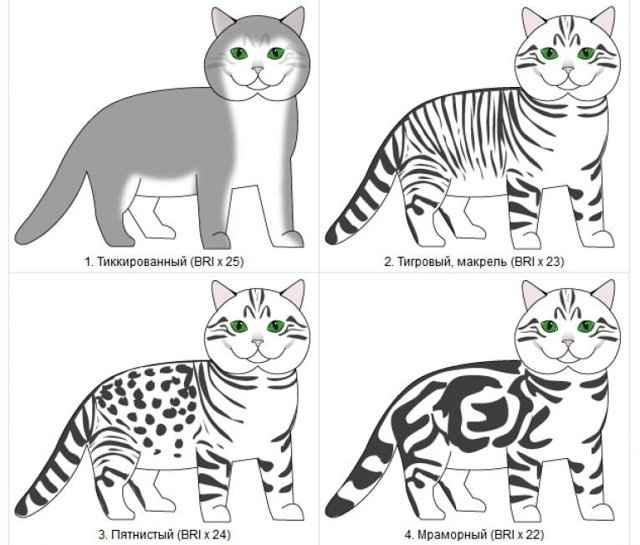 Табби - окрас кошек: фото, породы