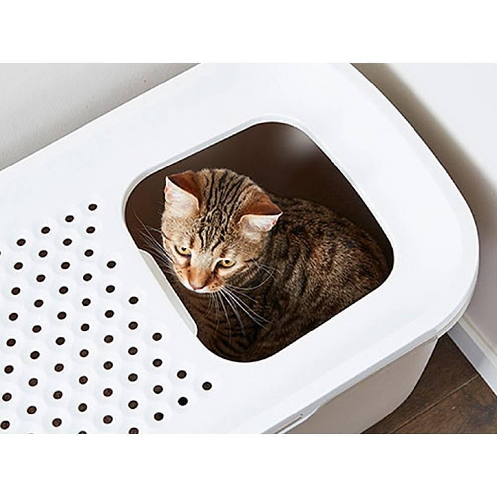 Лоток для кошек и котов: как выбрать идеальный кошачий туалет, в том числе с высокими бортиками