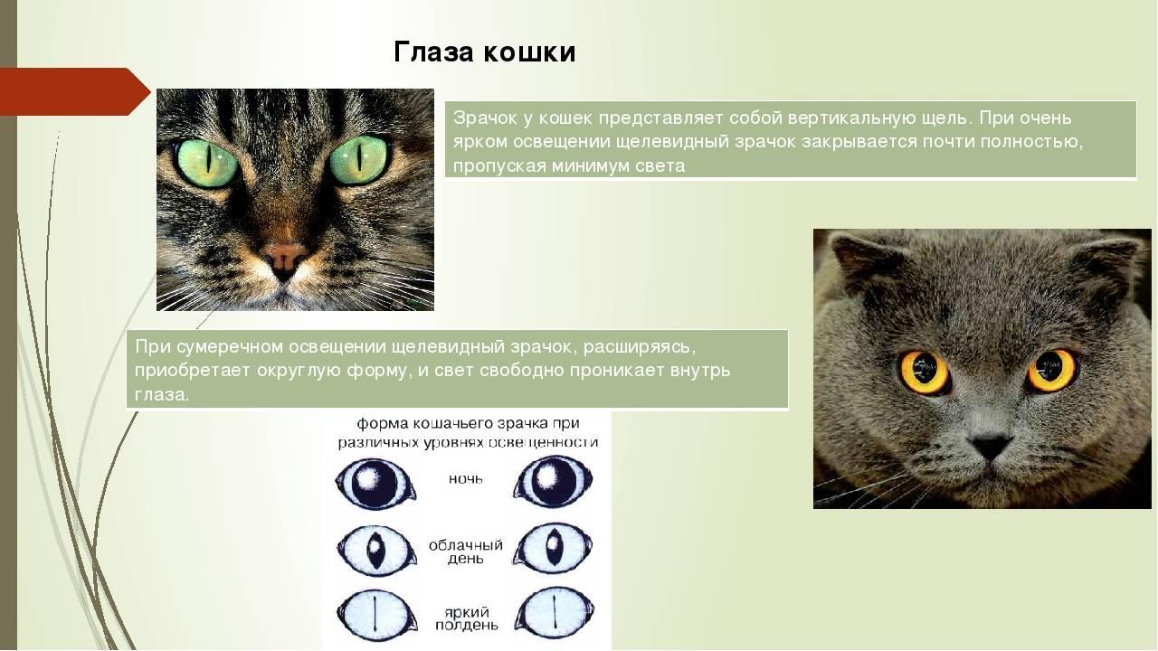 Особая связь между женщинами и кошками – 7 подтверждений