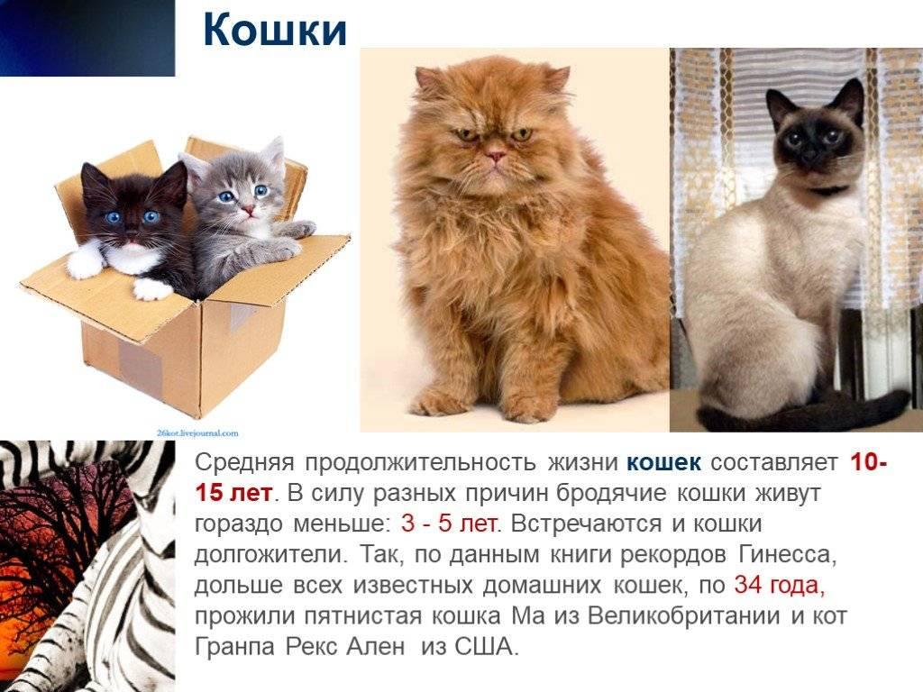 Сколько лет живут кошки и коты в домашних и уличных условиях