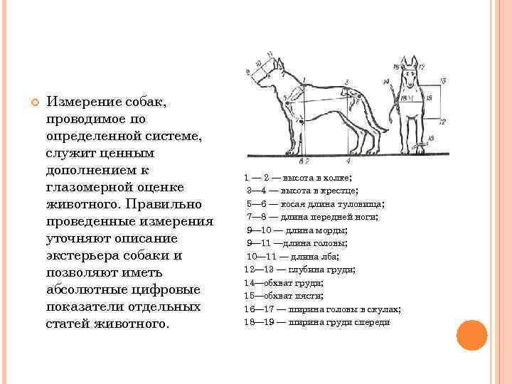10 группа fci породы. как классифицируются породы собак? классификация по версии мкф