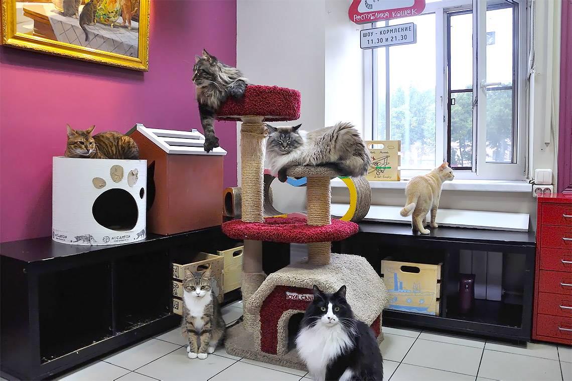 Кофе с кошками в москве ⋆ онлайн-журнал для женщин