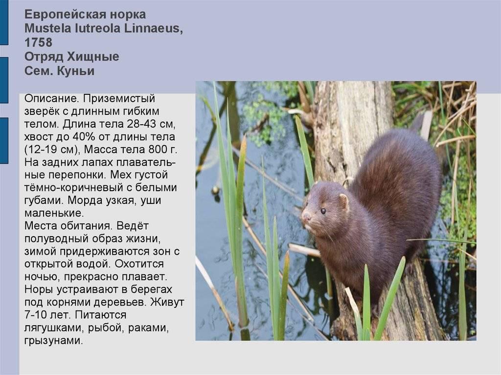 Дикие домашние животные: плюсы, минусы и особенности содержания