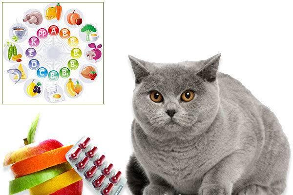 Нужны ли кошкам и котам витамины