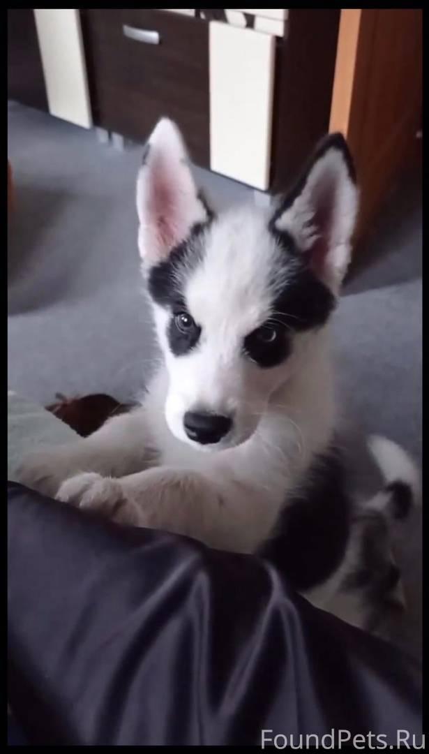 Клички для собак мальчиков — каким именем назвать щенка