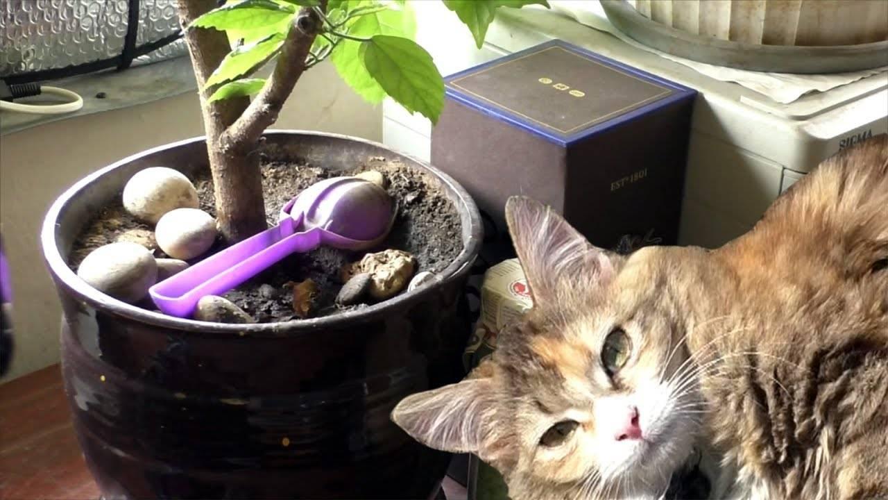 Как отучить кошку есть цветы