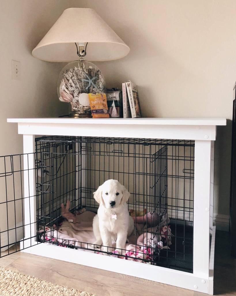 Что делать, если собака грызет вещи и мебель, как отучить ее это делать? как отучить собаку грызть вещи в отсутствие хозяина: проверенные методы воспитания, распространенные ошибки владельцев четвероногих друзей