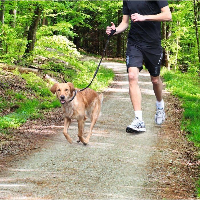 Как отучить собаку тянуть поводок на прогулке как отучить собаку тянуть поводок на прогулке