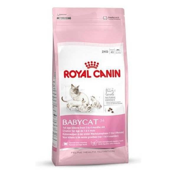 Обзор кормов для кошек royal canin