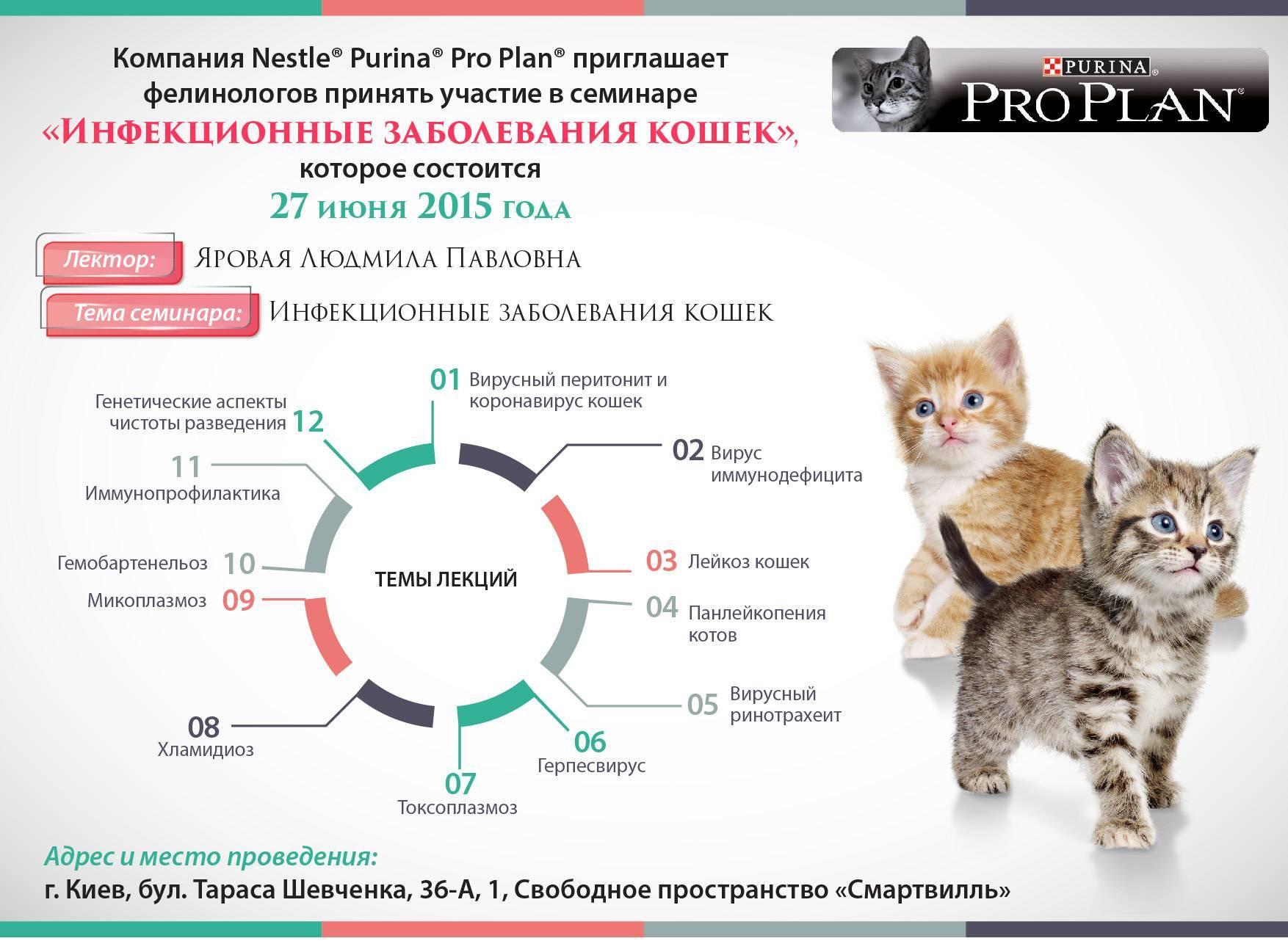 Вирусный иммунодефицит кошек. симптомы, лечение в россии