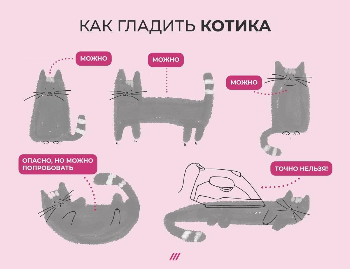 Пять вещей, которые дико бесят моего кота