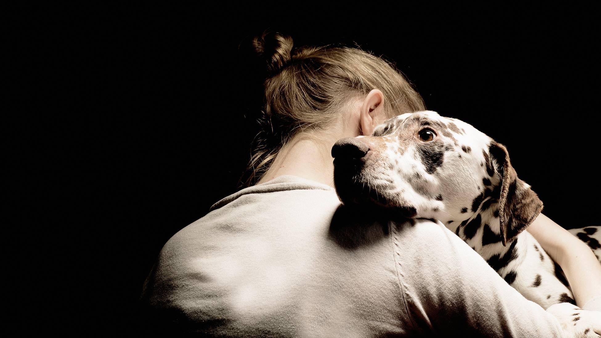 Почему собака грустит и расстраивается, причины, как развеселить