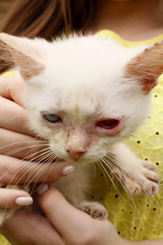 Респираторные болезни кошек — симптомы, диагностика и лечение