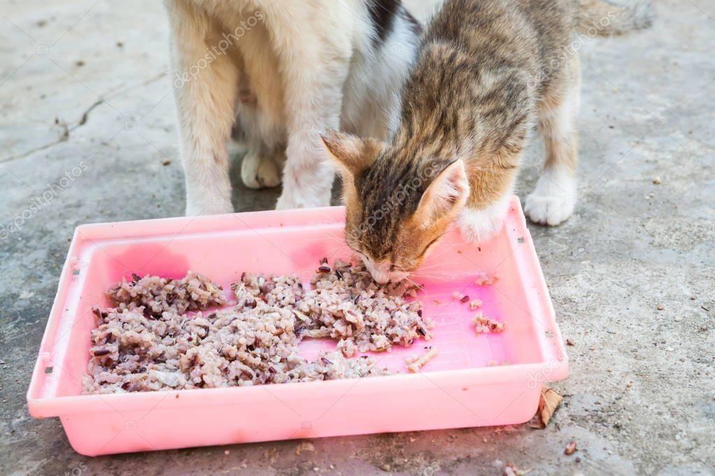 Десять самых опасных ядов для кошки | компетентно о здоровье на ilive