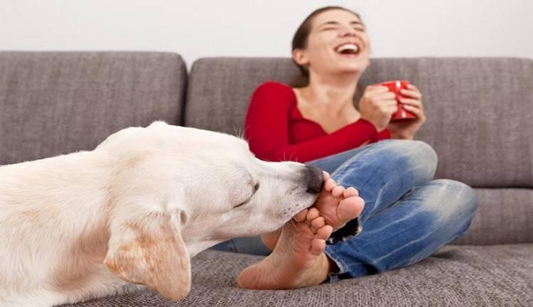 Собака (щенок) икает - после еды, часто, ни с того ни с сего, пытается стошнить, облизывается